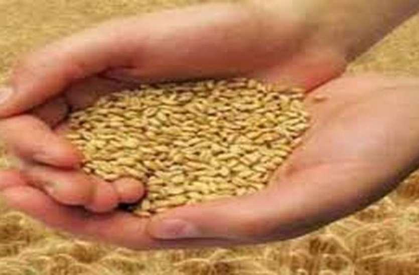 14 हजार से अधिक किसानों से खरीदा 817 मैट्रिक टन गेहूं