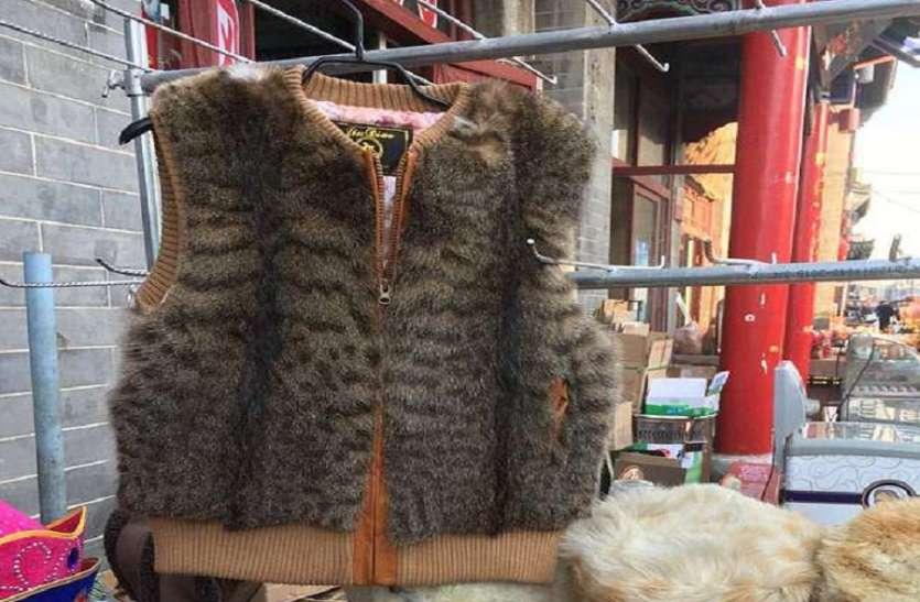 ऐसे जैकेट बनाने के लिए हर साल लाखों-करोड़ों बिल्लियों को मार दिया जाता है, रोंगटे खड़े कर देगी पूरी सच्चाई