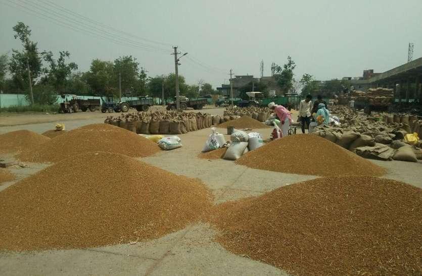 राजस्थान की इस मंडी में सरसों की आवक सर्वाधिक, सरकारी गोदामों में भी भरी सरसों