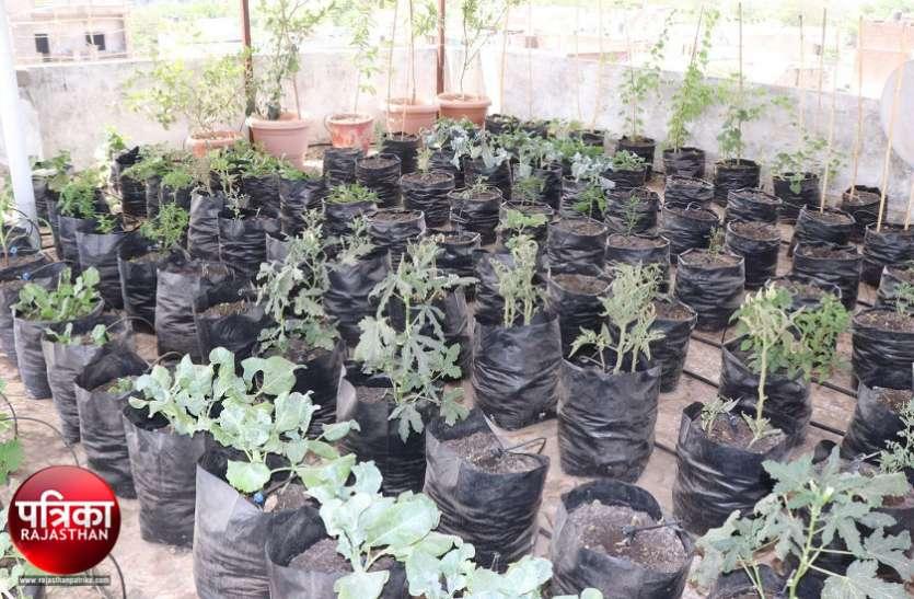 पौध संरक्षण दिवस : घर की छतों पर बढ़ा बागवानी का चलन, मिल रही सेहत से भरपूर फल-सब्जियां, खिल रहे फूल