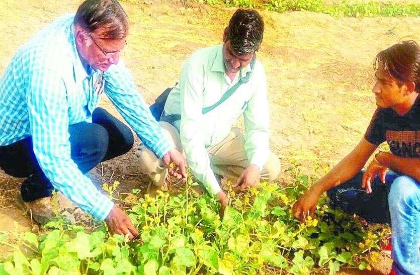 सब्जियों में बढ़ रहा कीट एवं रोगों का प्रकोप ,किसानों ने की उद्यान एवं कृषि अधिकारियों को शिकायत