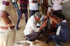 गोशाला में एक दर्जन गोवंश मृत मिलने से गांव में फैली सनसनी