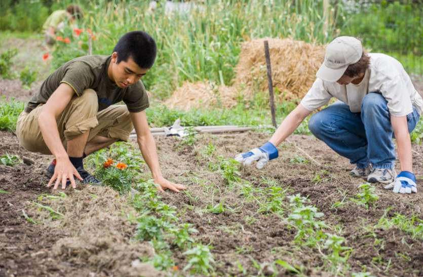 ICAR Agriculture Course exams 2018 - एडमिशन के लिए यहां देखे पूरी जानकारी