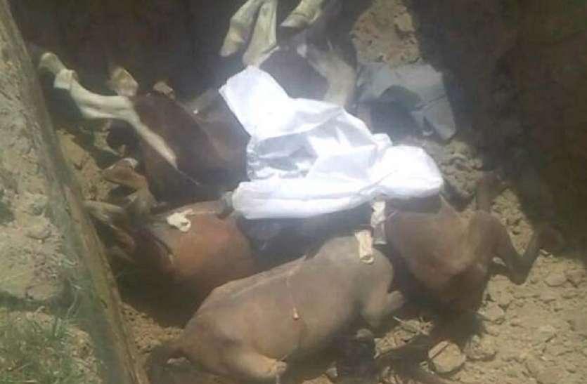 आजमगढ़ पहुंची खतरनाक बीमारी ग्लैंडर्स, डॉक्टरों ने इंजेक्शन से 5 घोड़े मारे