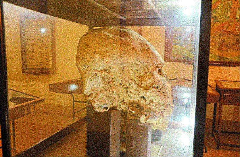 उज्जैन के इस संग्रहालय में ५ लाख साल पुराना हाथी का सिर...