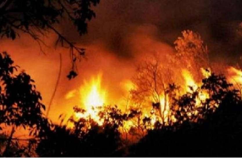 हिमचाल प्रदेश के जंगलों में फैली भीषण आग, पशु-पक्षियों के जीवन पर मंडराया संकट