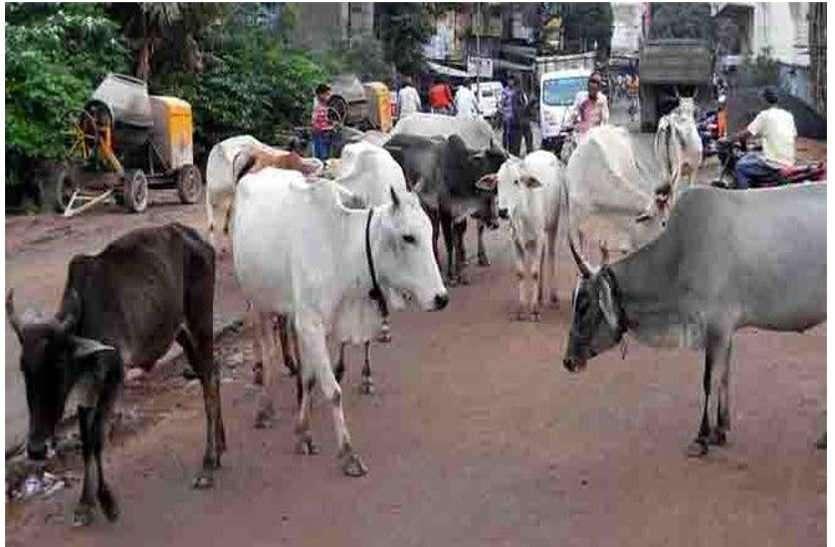 राजस्थान के इस शहर में बढ़ रहे हादसों को देखते हुए नगर परिषद ने लिया यह निर्णय, साथ ही दी कड़ी चेतावनी