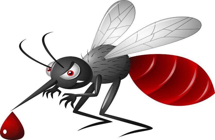 एसएमएस अस्पताल में डेंगू के 200 से ज्यादा मरीज