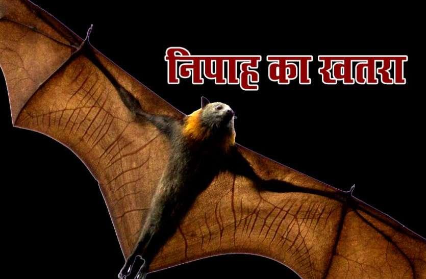 निपाह वायरस को लेकर 5 राज्यों में अलर्ट, हिमाचल में 20 चमगादड़ों के शव से हड़कंप