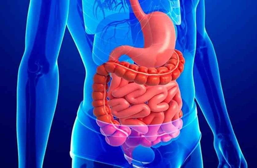 Excessive Leanness And Obesity Disturbs Digestive System - अधिक दुबलेपन व  मोटापे की वजह हो सकती है पाचनतंत्र की गड़बड़ी | Patrika News