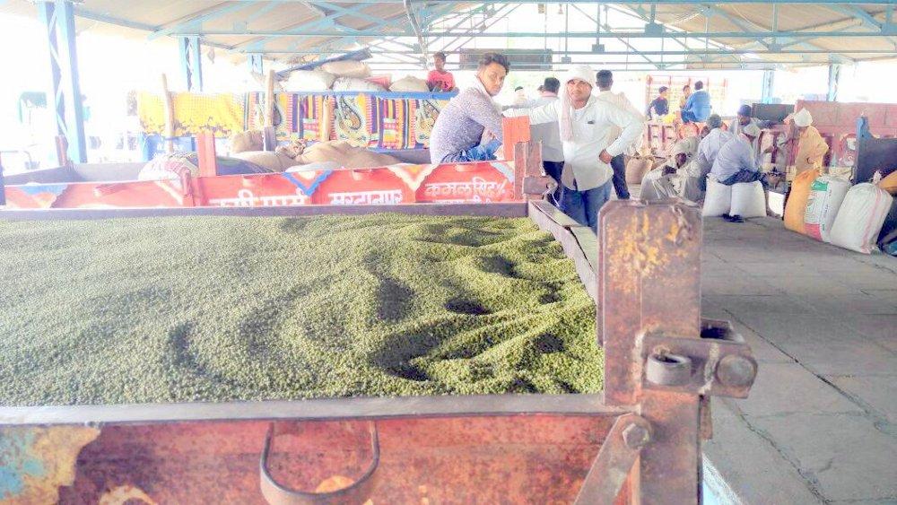 मूंग की समर्थन मूल्य पर खरीदी को लेकर संशय, व्यापारियों को कम दामों पर बेचना पड़ रही मूंग