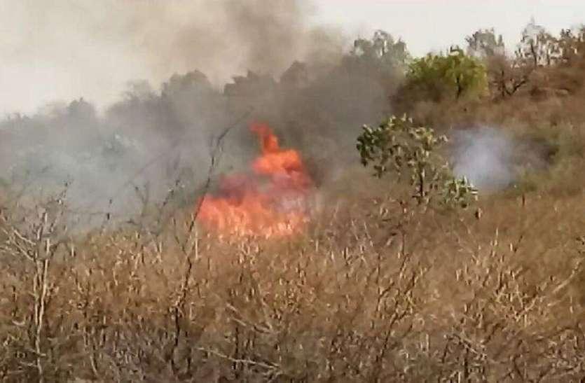 ऐसा क्या हुआ कि बार बार लग रही जंगल में भयानक आग
