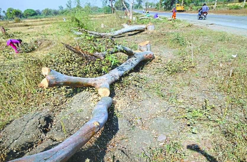 विश्व पर्यावरण दिवस : देखरेख के अभाव में चढ़ रही हजारों पेड़ों की बलि