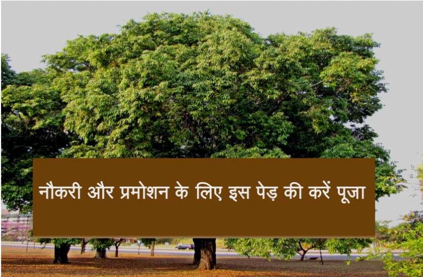 नौकरी और प्रमोशन के लिए इस पेड़ की करें पूजा