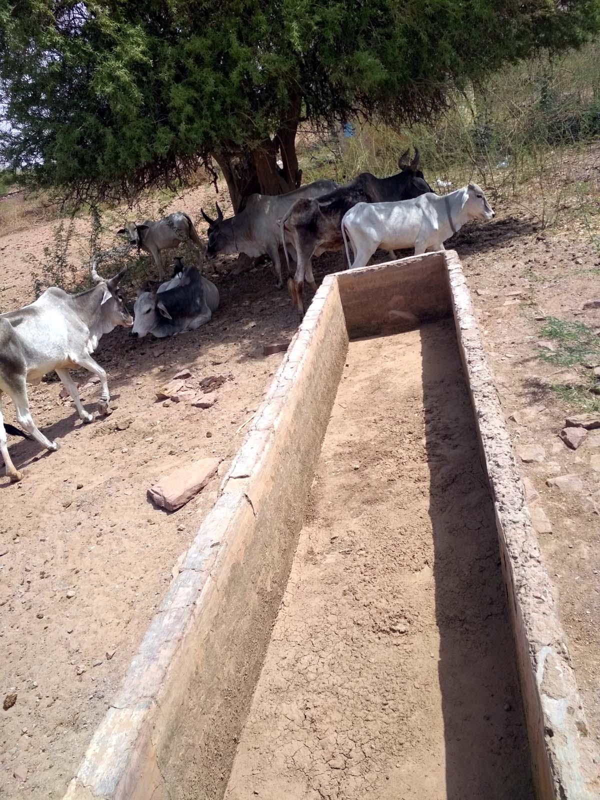 JAISALMER NEWS- डेढ़ दशक से पानी को तरसता राजस्थान का यह गांव, इतने महंगे दामों में बुझ रही प्यास