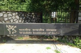 भारतीय वन्यजीव संस्थान में प्रोजेक्ट साइंटिस्ट और प्रोजेक्ट फेलो के पदाें पर भर्ती, करें आवेदन