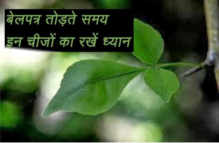 साक्षात भगवान शिव का स्वरुप होता है बेलपत्र का वृक्ष, पत्ती तोड़ते समय इस चीज़ का रखें विशेष ध्यान