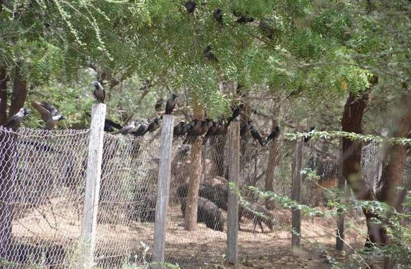 प्रदेश में नागौर ग्राम पंचायतवार वन्य जीवों की गिनती करने वाला पहला जिला