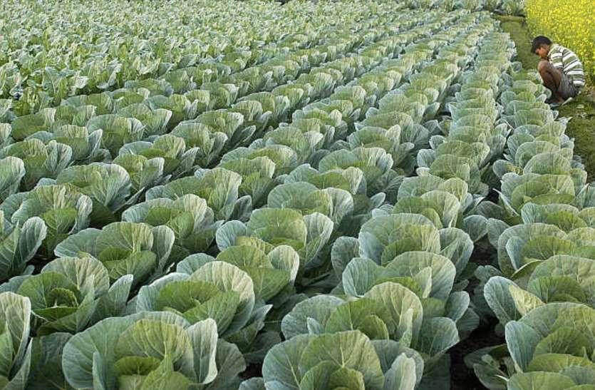इस योजना का युवा किसान उठा सकते हैं फायदा, 10 लाख से लेकर 2 करोड़ तक का मिल सकता है लोन