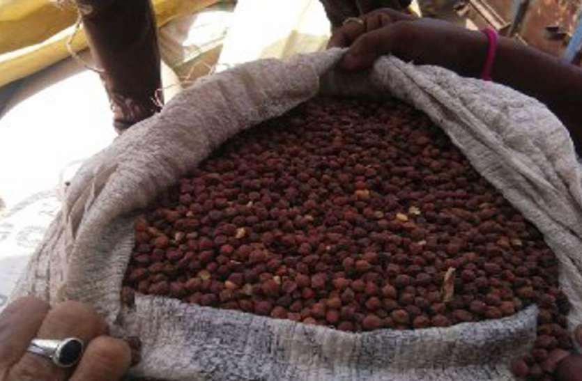 घुना चना लेकर बेचने पहुंच गया किसान, ऐसे पकड़ाई चोरी