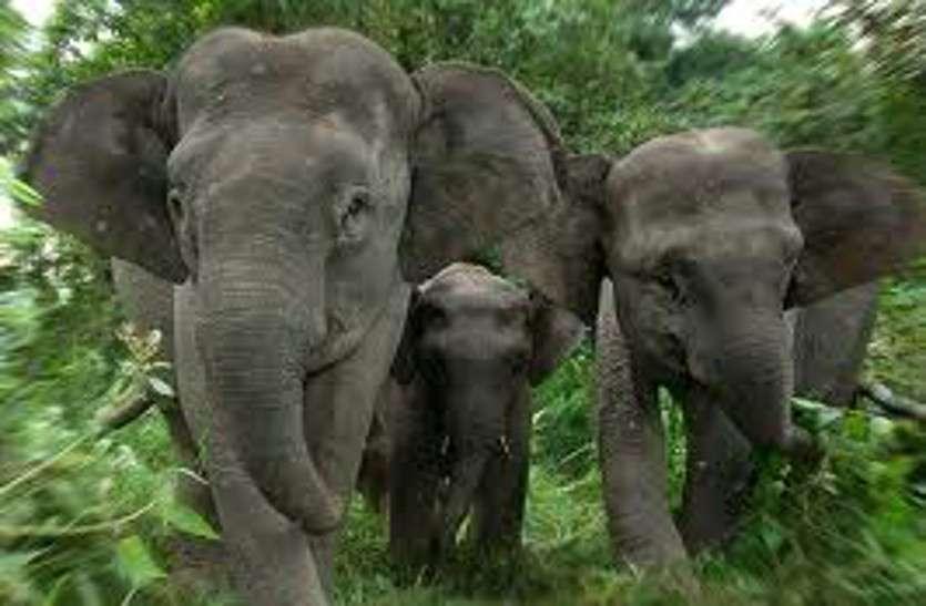Breaking News : गांव से एक किलोमीटर दूर नित्य कर्म के लिए बाहर गई थी महिला, दंतैल हाथी ने महिला को कुचल कर मार डाला