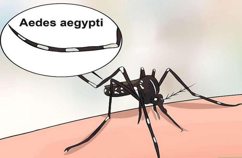 श्योपुर में डेंगू की जांच सुविधा न उपचार, राजस्थान जाते हैं मरीज