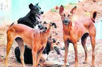 यूपी के इस जिले में 40 हजार कुत्तों की होगी नसबंदी