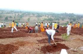 झारखंडः रातभर में बदमाशों ने काट दिए 3,000 फलदार पौधे, बगीचे के मालिक को भारी नुकसान