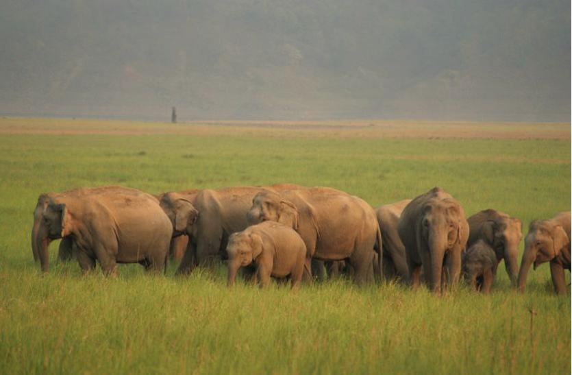 झारखंड में हाथियों के लिए कॉरिडोर बनाने की रुपरेखा तैयार
