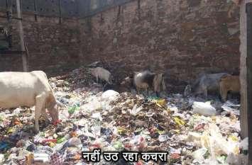 गायों के लिए कचरा बना जहर