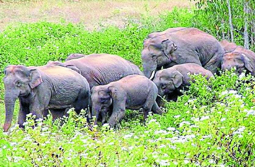 झारखंड में जंगली हाथियों के उत्पात में दो बच्चों की मौत, एक महिला घायल