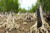 बढ़ता कोष, घटते वन