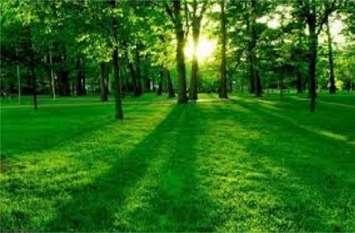 हरियाली अभियान के तहत लगाये जायेंगे 25 लाख पेड़, एक व्यक्ति एक वृक्ष का लक्ष्य