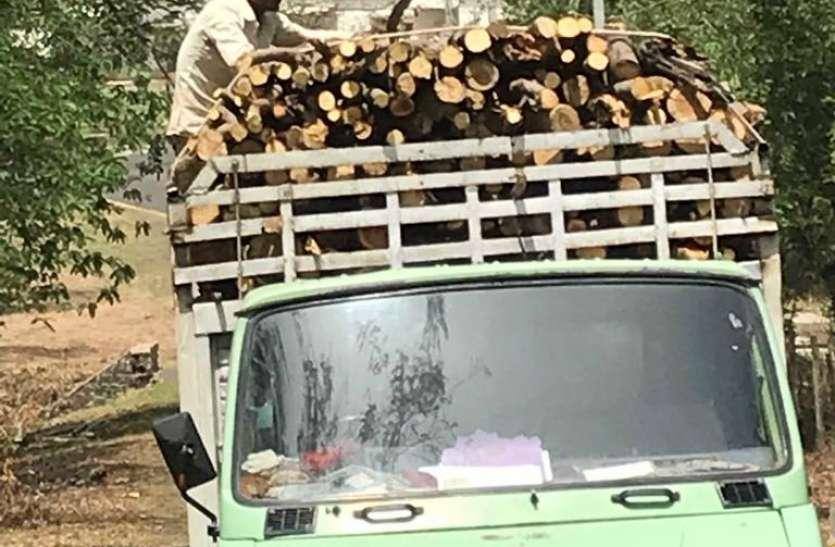 सूखी टेहनियां छांटने की आड़ में ठेकेदार ने काटे हरे-भरे पेड़