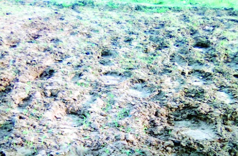 साहीडांड़ क्षेत्र में जारी है जंगली हाथियों का आतंक