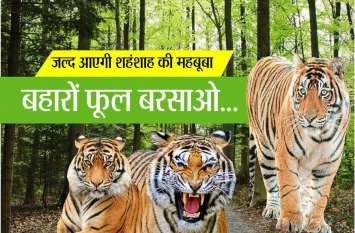 अब इस जंगल में अकेला नहीं रहेगा बाघ, जल्द मिलेगी ये सौगात