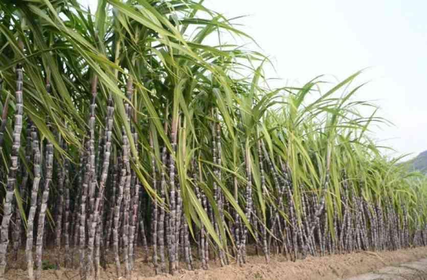 गन्ना उत्पादक किसानों ने की बकाए के भुगतान की मांग