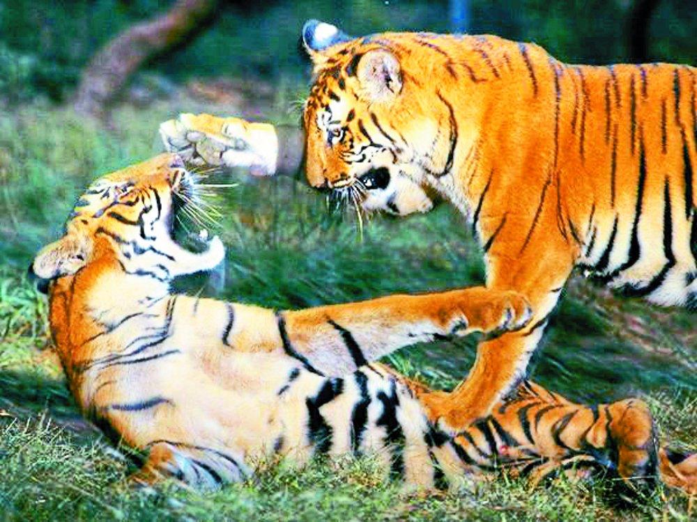 हिंसक वन्यप्राणी व मानव संघर्ष की घटनाएं चिंताजनक
