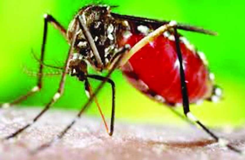बारिश से पहले ही नौ हजार जगहों पर मिला डेंगू का लार्वा