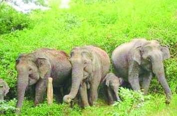 नदी में मस्त था हाथियों का ये दल, जब देखा अचानक इंसानों को गुजरते तो फिर...