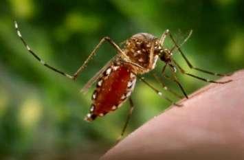 डेंगू की गिरफ्त में हिमाचल प्रदेश, सामने आए  110 से अधिक मामले