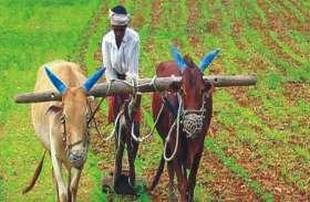 MP के इस जिले में गौसंवर्धन के लिए किसान करेंगे खास तरह की खेती, मवेशियों को हष्टपुष्ट बनाने सहित कमाएंगे मुनाफा
