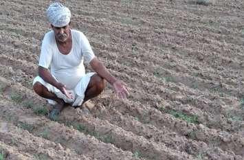 मानसून की बेरूखी से किसान चिंतित, मुरझाने लगी धरती पुत्रों की उम्मीद
