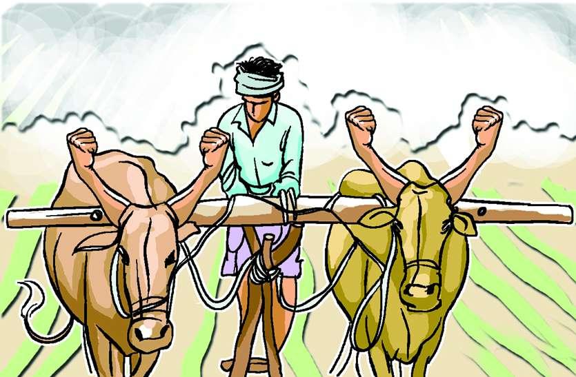 196 करोड़ रुपए का कर्ज लेकर किसानों ने खेती पर लगाया दांव