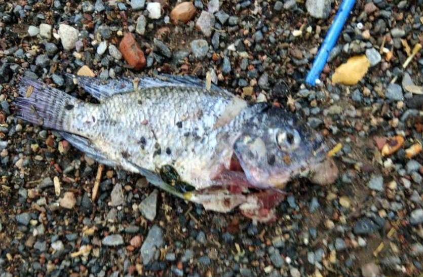 फतेहपुरसीकरी में  बुलंद दरवाजा पर आसमान से बरसीं मछलियां