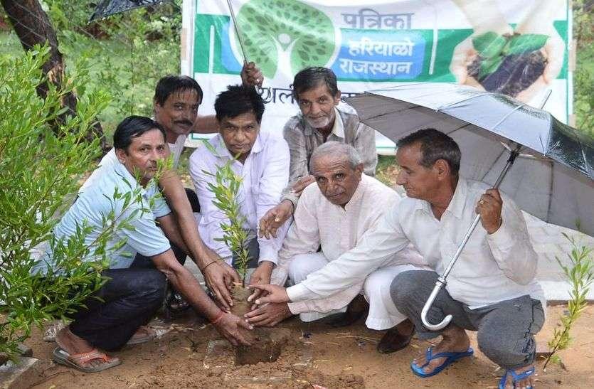 हरियाळो राजस्थान अभियान में उमड़ रहे लोग, उत्साह से कर रहे पौधरोपण