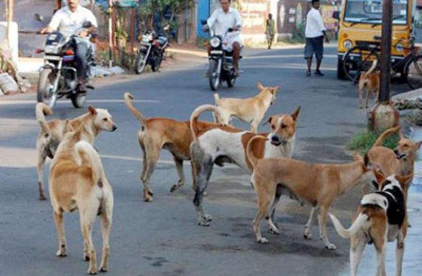 आवारा कुत्तों ने बच्चों को काटा, एक बच्चे की हुर्इ मौत
