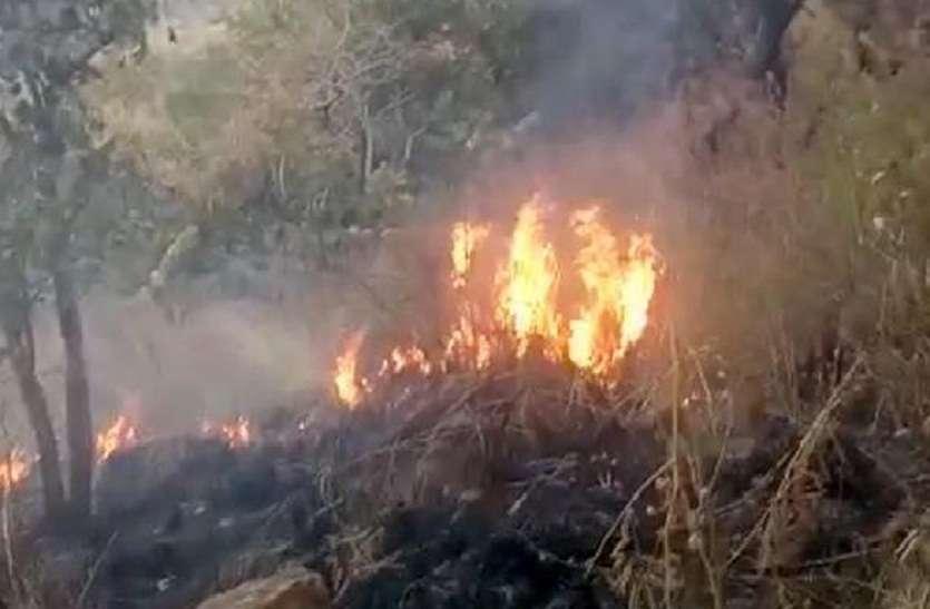 कुरंगनी के जंगलों में आग मामले की रिपोर्ट आयोग ने मुख्यमंत्री को सौंपी