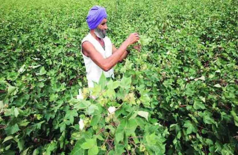 जीएम फसलों की खेती में भारत दुनिया में पांचवें स्थान पर, चीन-पाकिस्तान को पछाड़ा