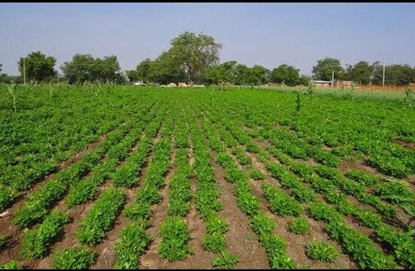 5.73 लाख हैक्टेयर में खेती का लक्ष्य, अब तक 12 फीसदी क्षेत्र में बुआई